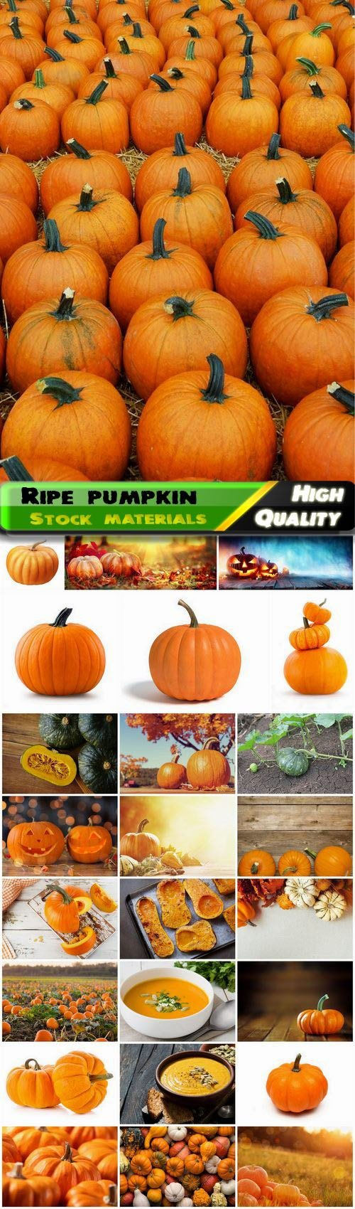 Ripe and green vegetable pumpkin on the field 25 HQ Jpg
