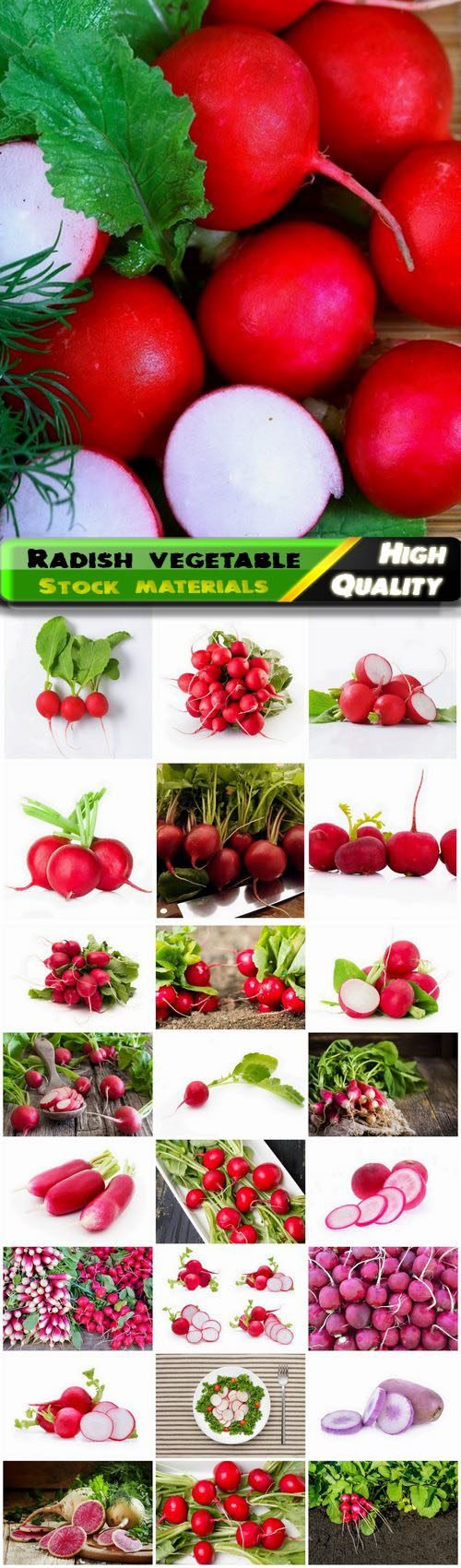 Radish vegetable from the genus Radish of Cabbage family 25 HQ Jpg