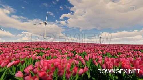 MA - Windmills And Field Of Tulip Flowers 77413