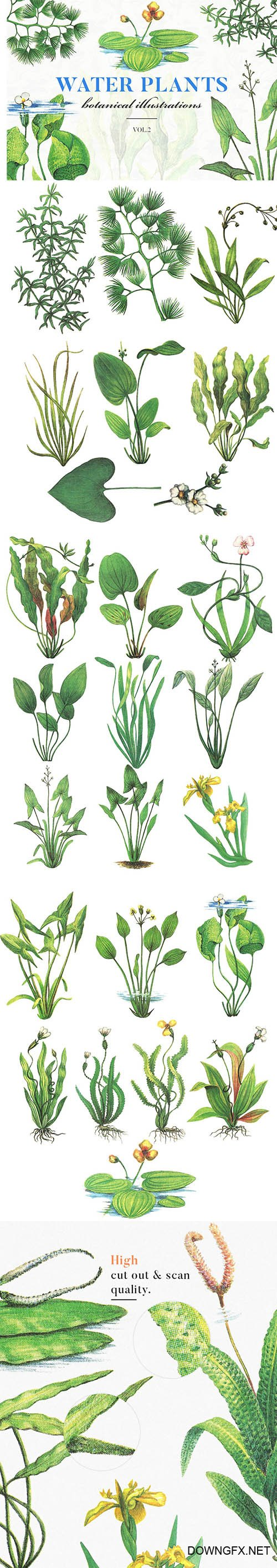 Water Plants Vol.2 PNG