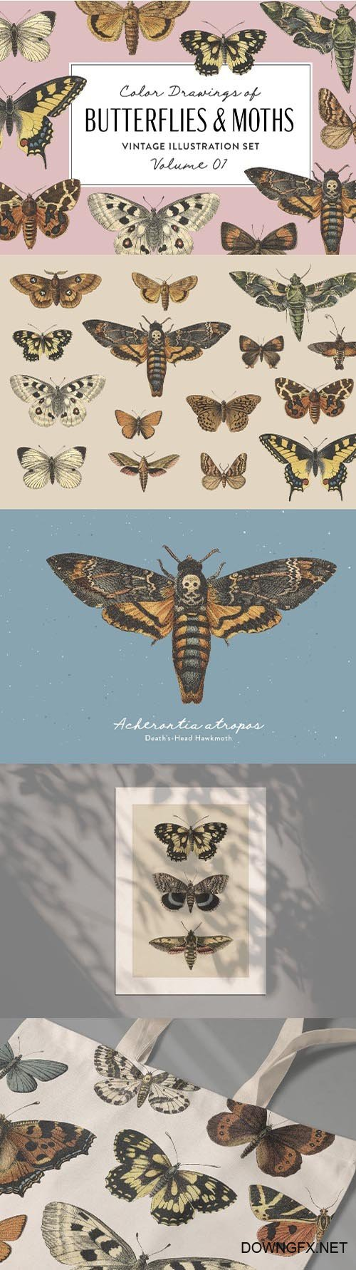 Butterflies & Moths Vintage Graphics Vol. 1 PNG