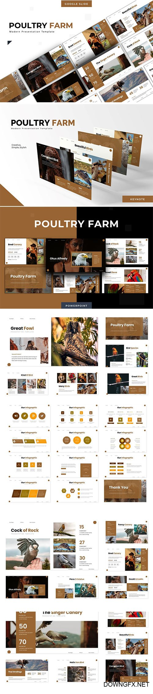 Poultry Farm - Powerpoint Template, Keynote and Google Slide Template