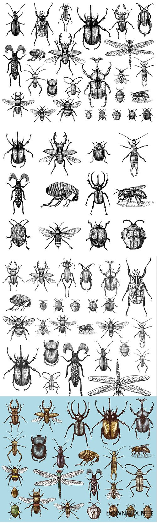 Big set of insects bugs beetles and bees in vintage old hand drawn style